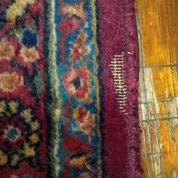 Insect Control from Area Oriental Rugs Chicago